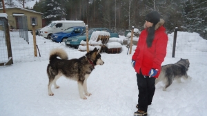Marianne seuraa koirien touhuja