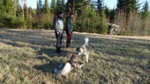 Matti ja Teemu seuraavat koirien touhua
