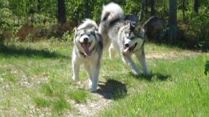 Siiri ja Timmy juoksevat helteessä