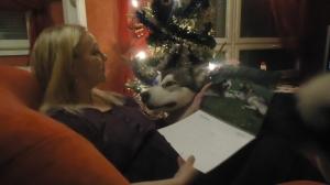Timmy katsoo kun minä sain koiristamme kertovan kuvakalenterin!