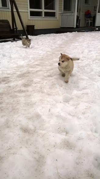 juoksentelua