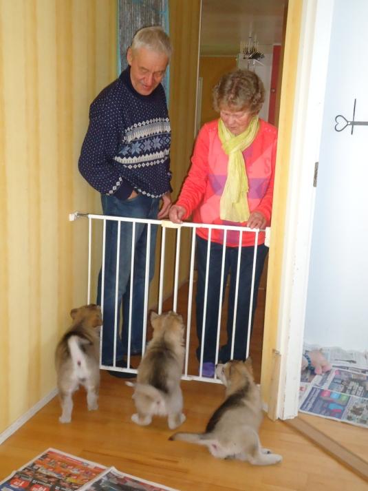 Irja -äiti ja Oiva-isä kävivät vielä kerran katsomassa pentuja