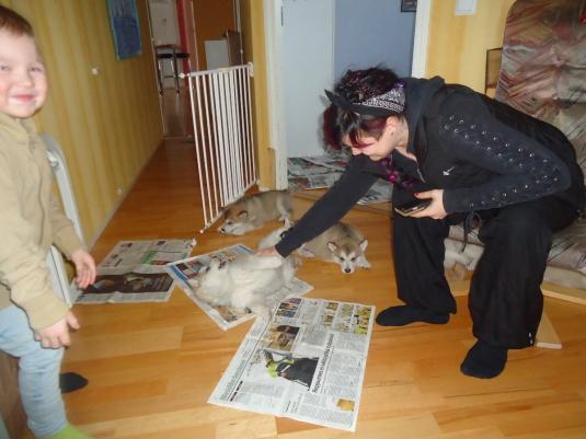 Tiia ja Leo hoitavat pentuja