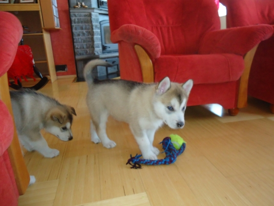 Nelli ja pallo