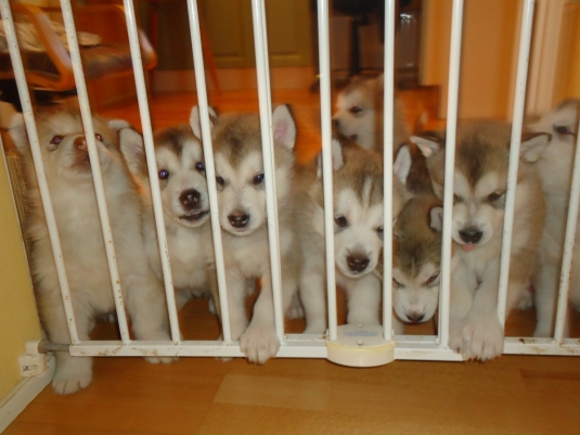 pikku vangit