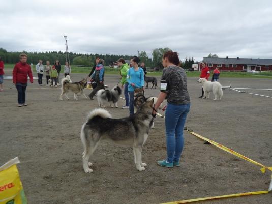 Muutteja ja joku toinen iso aikuinen koira :)