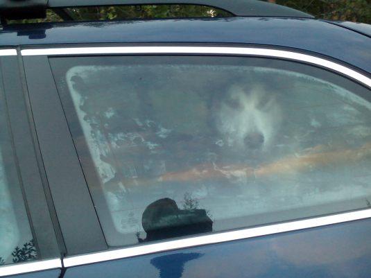 yksinäinen Nooa autossa