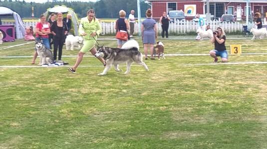 2.Timmy ja Laura juoksee