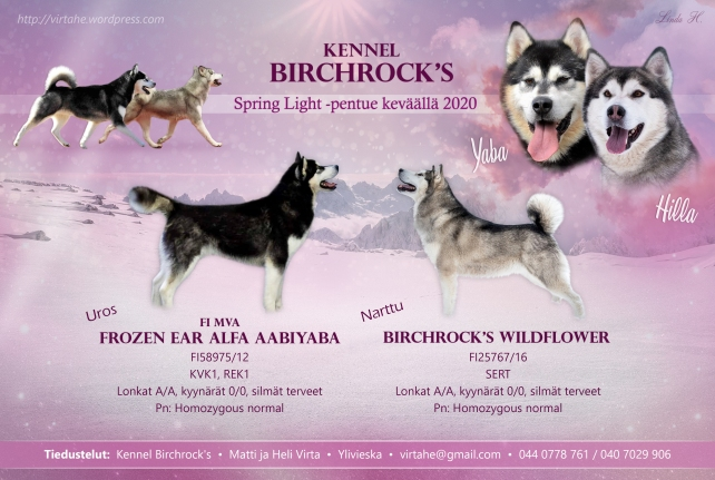 Birchrock's_Mainos